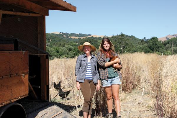 picture foolish hens farm