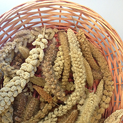A-variety-of-millets