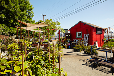 Ploughshares Nursery offers an impressive selection of drought-tolerant plants and California natives, with proceeds used to support APC's programs for formerly homeless adults and children. Photo: Lindsay Dobbs