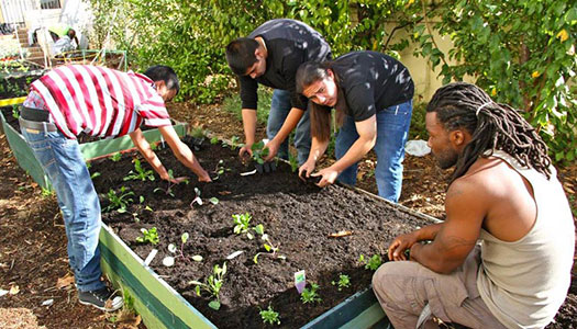 Planting Justice builds edible gardens and provides living-wage jobs for men transitioning out of prison. Photo courtesy of Blue Heart.