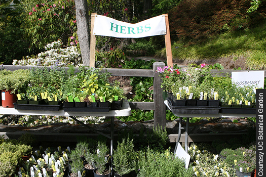 Find drought-resistant plants, lawn replacements, and exotic offerings at the UC Botanical Garden plant sale.