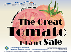 CCMG Tomato Sale-branded title w jpg
