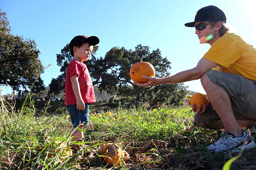 Picking that special pumpkin at Capay Organic. Photo courtesy of Farm Fresh to You.