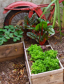 Container gardening image w2