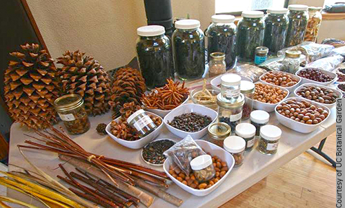 This workshop offers a window into the history and uses of California's edible and medicinal plants.