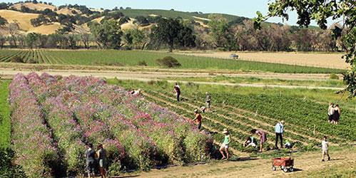 Farm-Fresh-to-You-spring