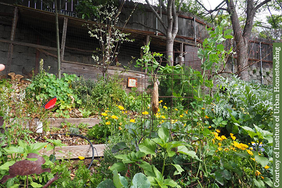 The magical, thriving Benicia Sunset Garden is one highlight of the upcoming farm tours.