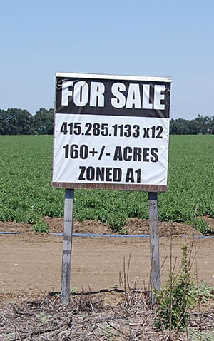 This parcel near Davis, listed at $4 million, is a bargain by local standards. But what beginning farmer can write that check? (Photo by Mike Madison)