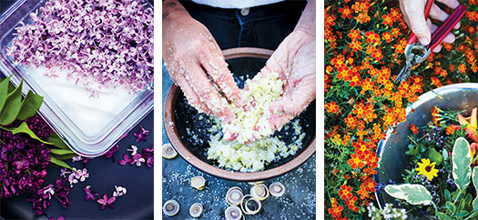 Harvest offers ideas for creating beautiful and delicious treats using items from your garden.