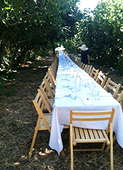 Enjoy a vegetarian feast in the fig orchard at Brentwood's Knoll Farm. Photo courtesy of Outstanding in the Field.