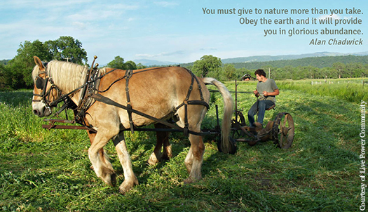 Learn about ecological and horse-powered farming on a weekend trip to Live Power Community Farm.