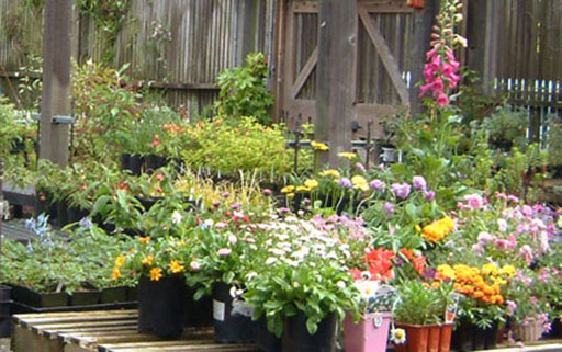Experienced gardeners and novices alike can find just what they need at the Merritt College plant sale.