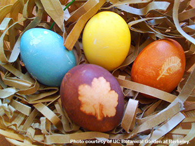 A family workshop on creating naturally dyed eggs is among the many offerings connected to the Fiber & Dye exhibit this month