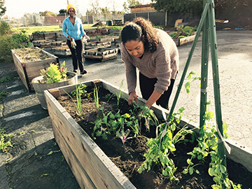 Paradise Community Garden leader Shanale (left) and workshop instructor Kiyoko (right) tend their raised beds. Photo courtesy of Audrey Lieberworth.