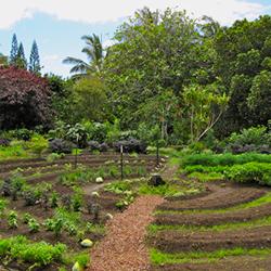 Permaculture-crop