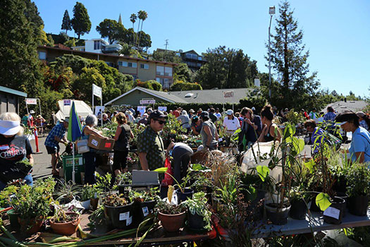 Come to The Plant Exchange to take or donate plants, tools, and other garden-related items.