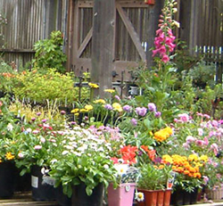 Plant Sales_Merritt Hort w