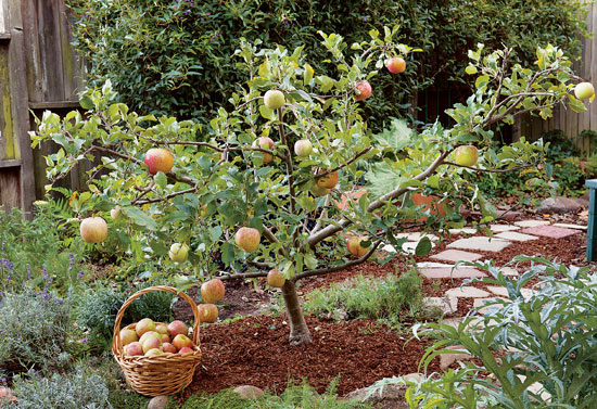 A new series of workshops at Pollinate Farm & Garden offers lessons in growing and caring for fruit trees.