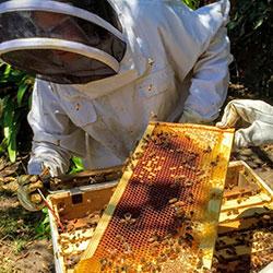 Urban-Farm-Day_bees-cr