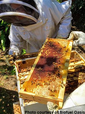 Urban-Farm-Day_bees