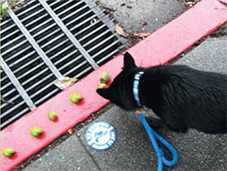 "DO DOGS LIKE AVOCADOS? There are many stories of dogs who love avocados, and many a dog has eaten the fallen fruit. Some veterinarians say to avoid feeding avocados to dogs. In particular, the skin and the seed may be toxic, although avocado flesh is used in several high-end kibbles. Says Bruce Beernink, ""My dogs have been eating avocados for years without a problem. Of course, I can see a puppy chewing on the seed out of puppiness."" The best advice is to always err on the side of caution and make sure your dog is not allergic or sensitive."