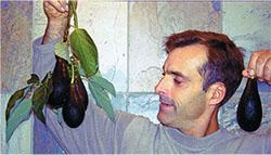 Gary Gragg with his favorite avocado, Mexicola Grande (Photo by Kara Gragg)
