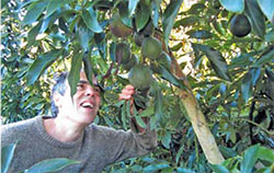 "John Valenzuela's photo of Freddy Menge, who he calls one of the ""bright lights of the nouveau avocado growers in Northern California."""