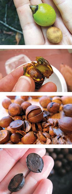 bay-nuts