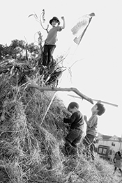 Kids play on a grass house built at Occupy the Farm. Photo by Kelly Johnson