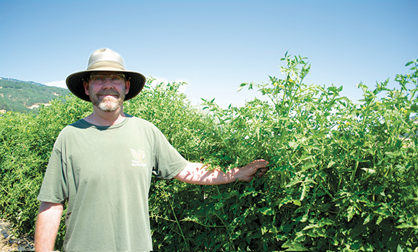 Brad Gates of Wild Boar Farms breeds a wide and wild variety of tomatoes. (Photo by Alice Reed.)