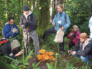 "The Merritt College mushroom class discovers Gymnopilus spectabilis, or ""Laughing Gym,"" while on a foray in Mendocino. MSSF vice president David Gardella is right of center in the light-blue jacket."