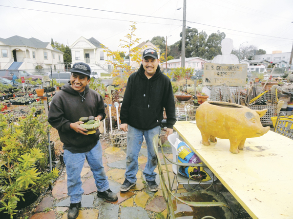 Emilio and Cris with avocados from several East Bay trees, and a ceramic pig for tamales, at East Bay Wild Nursery in the Fruitvale District.