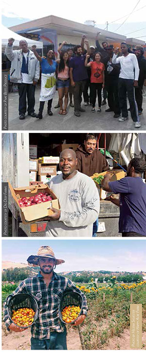 Top: The team at Phat Beets Produce source from six ethnically diverse farms for their Beet Box. Middle: At Dig Deep Farms, creating jobs for residents of the farm sites' urban neighborhoods is part of the mission. Bottom: Matthew Sylvester brings in the tomatoes from the two acres he and Helena Sylvester farm at the Sunol Ag Park.