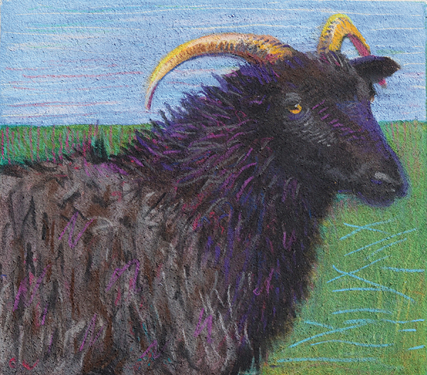 """Black Sheep"": Dry-point monoprint by Celia Wedding"