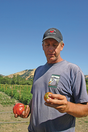 Fred Hempel's interest in tomato breeding led him into farming. The tomatoes he grows at Baia Nicchia are, in one sense, a means for evaluating and perpetuating his work toward producing seed for other growers, but the ripe fruits are in demand. Local chefs like Anthony Paone at Lalime's in Berkeley covet Hempel's tomatoes for their kitchens. See page 48 for more on how Paone uses these exceptional tomatoes. (File photo.)