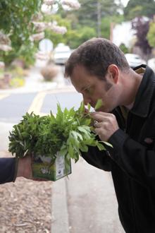gardentotable-9724_smell