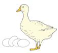 goose_eggs