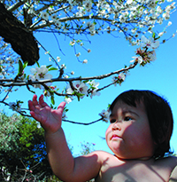 Idell Wedemeyer's granddaughter, Daveri, investigates some cherry blossoms. (Photo by Cristi Meremeyer).