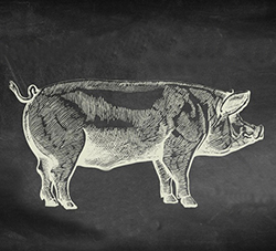 harvest-pig