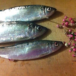 herring-peppercorn