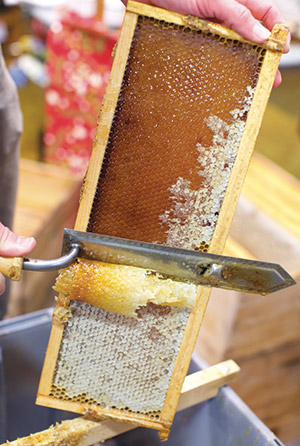 Honey harvest at Alameda Natural Grocery (