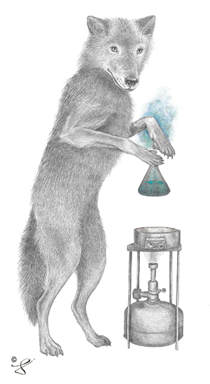 If you visit the Ohlone Herbal Center and peruse the bookshelves, you may notice this drawing of a wolf preparing an herbal healing potion. Artist Laura Morrish says she draws her whimsical Algonquin-inspired animals, like the wolf Luna Sage, as totems for those who have galvanized her life.  Learn more at lecanotrouge.com.