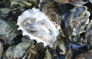 oystersCK