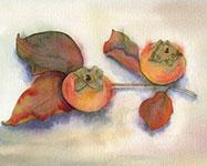 Wtercolor by Helen Krayenhoff
