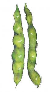 rom-beans