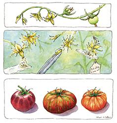 tomato-art