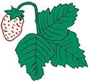 white-strawberries