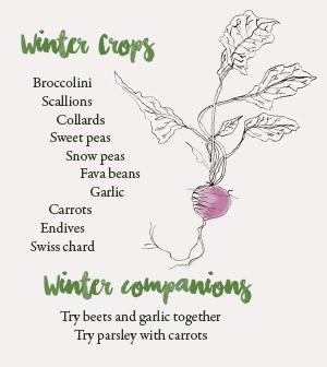 winter-companiions
